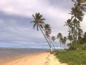 185 praia coqueiros