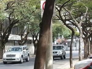 Micos na Praça Mendes Júnior  (2)